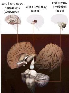 mógz gadzi ssaczy i człowieczy