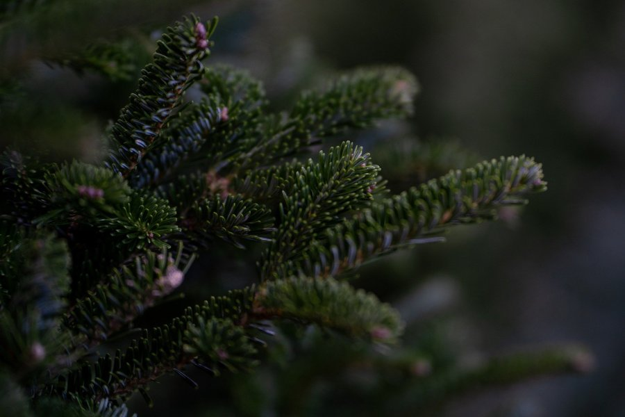 Święta w toksycznych relacjach – Corobić?